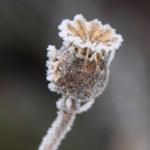 Seed Heads Thumbnail