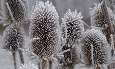 Add drama to your winter garden