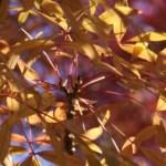 autumn-leaves-thumbnail