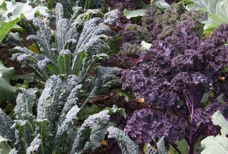 veg garden 085