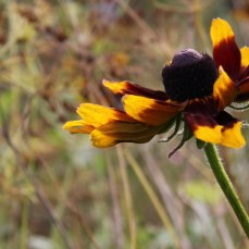 wildflowers-and-seedheads-october