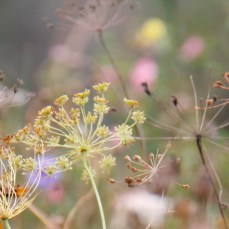 wildflowers-october