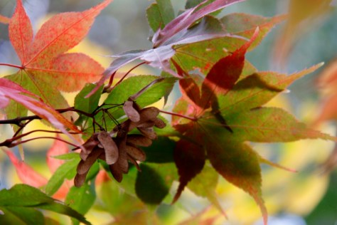 acers 034