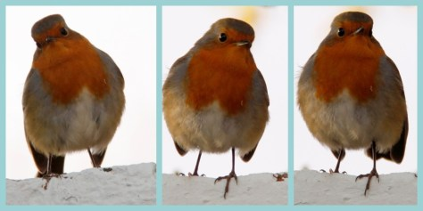 Robin Collage
