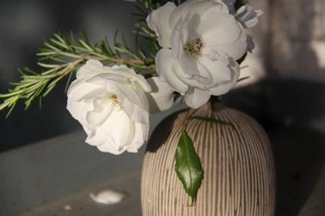 rosemary-rose