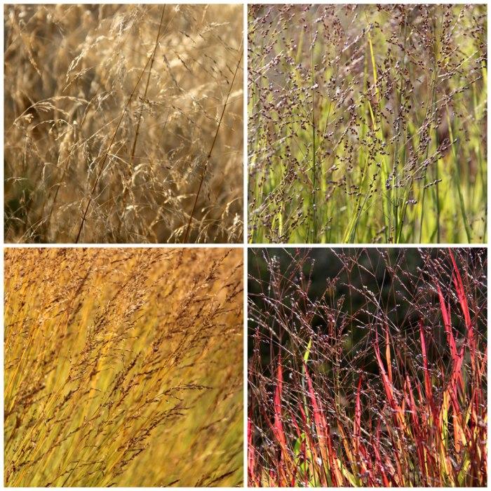 Grasses-Collage