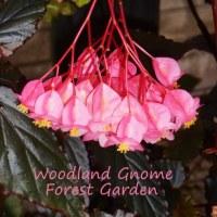 Woodland Gnome