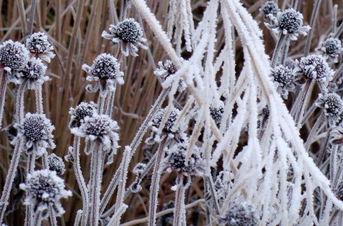 Frozen-Seed-Heads