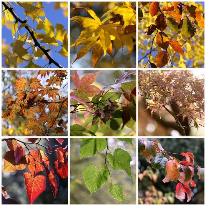 Autumn-Colour-November
