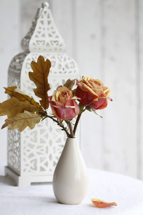 cherry-brandy-roses-oak-l