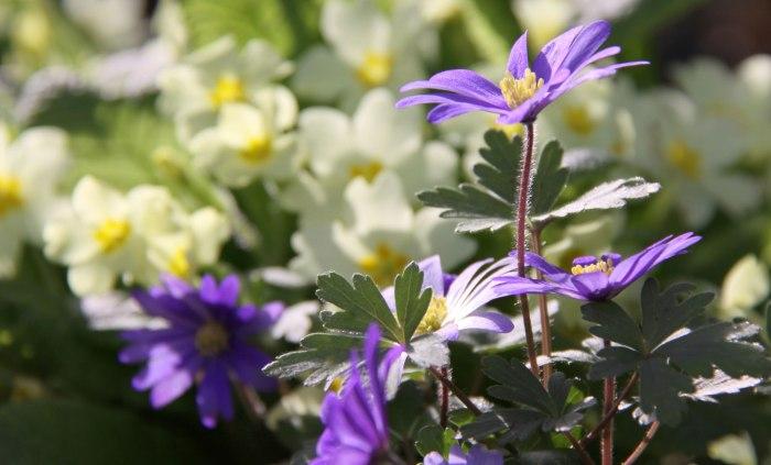 Spring-Flowers-Country-Garden-UK