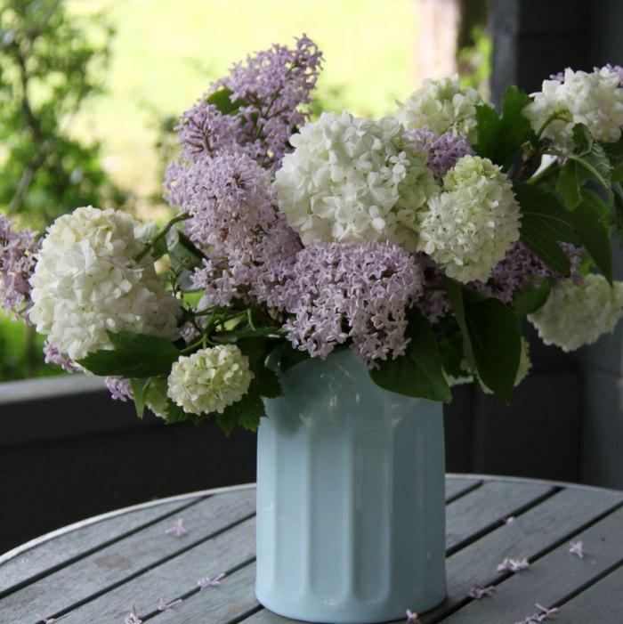 Lilac-&-Snowball