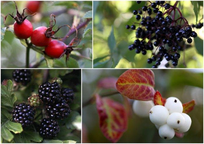 september-fruit