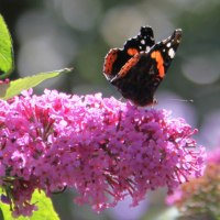Best Plants for Butterflies