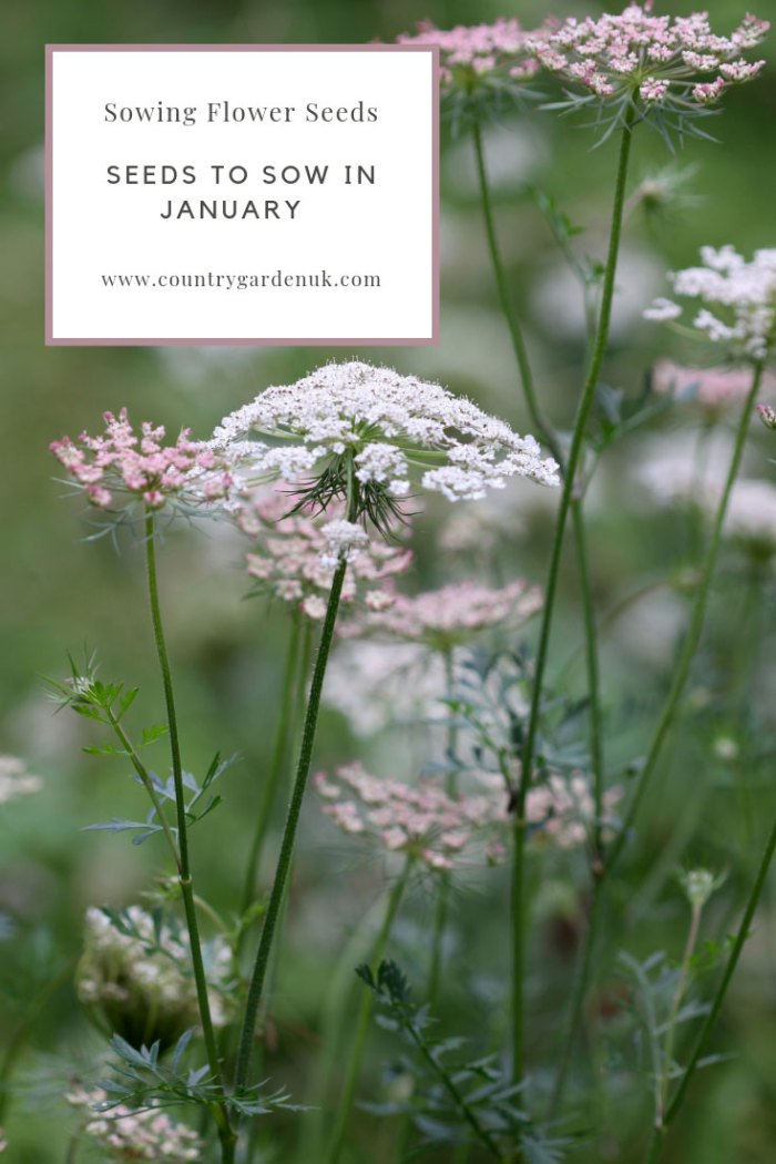 Seeds-to-Sow-in-January