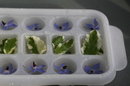Borage & Mint Ice 01