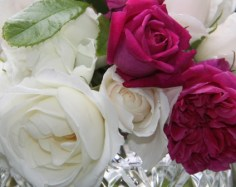 English Roses 04