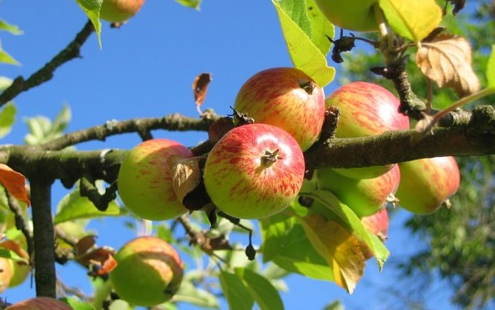 The Best Breakfast Ever! - Enzyme Rich, Healthy Apples