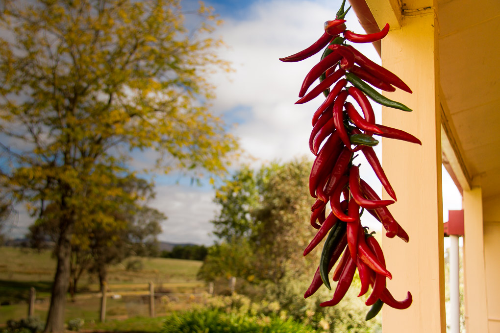 How To Dry Chillies-2