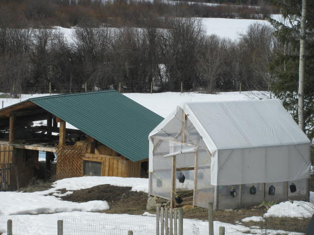Greenhouse covered with tarp for wind and snow protection.