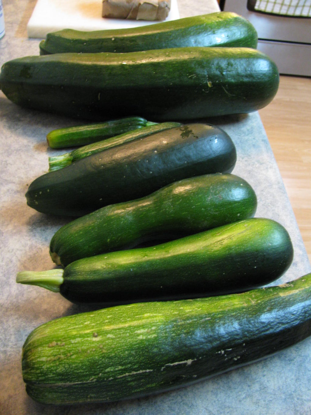 how to grow zucchini, zuccini