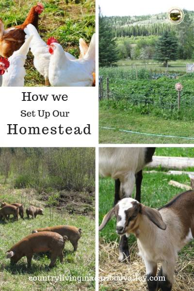 chickens, pigs, goats and a garden in the country