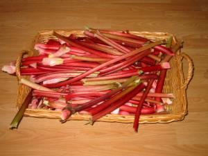 Rhubarb, wine, wine making, Rhubarb wine
