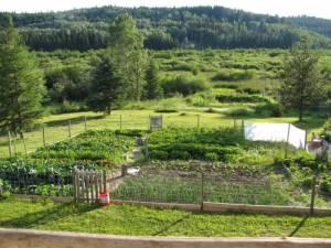 vegetable, garden, veggies
