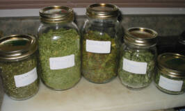 How to Dry Herbs Without a Dehydrator #herbs #cooking #gardening