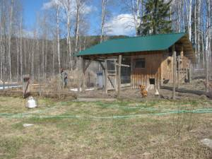 build your own barn, chicken coop, garden, country living in a cariboo valley