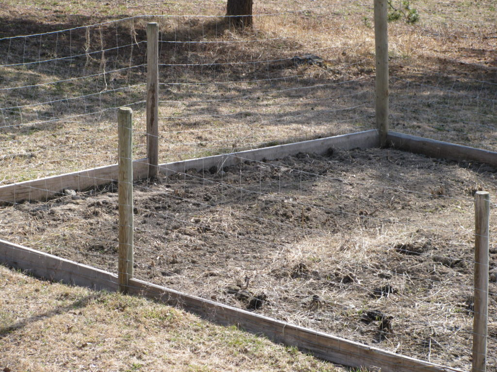 Asparagus beds need to be as weed free as possible. This perennial vegetable will live for decades in your yard and deserves respect!