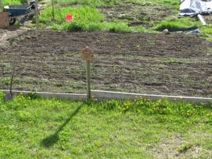 garden, vegetable garden, country living in a cariboo valley, potatoes, self sufficiency