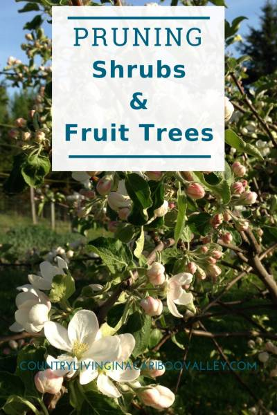 Tips on how to prune shrubs and trees. Spring pruning for your backyard garden. #shrubs #garden #backyard #pruning