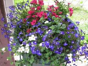 flowers, porch sitting, country living in a cariboo valley, annuals,