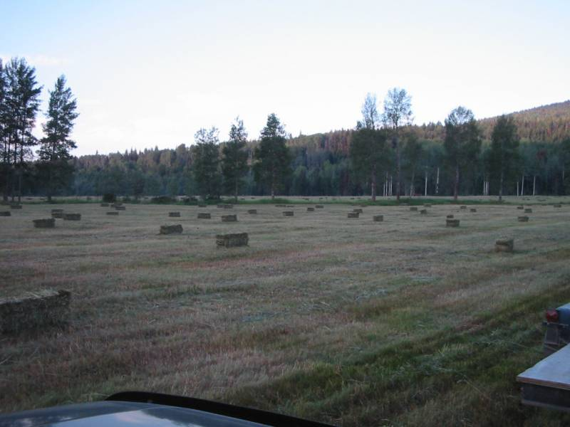 large hay bales sit in a cut field