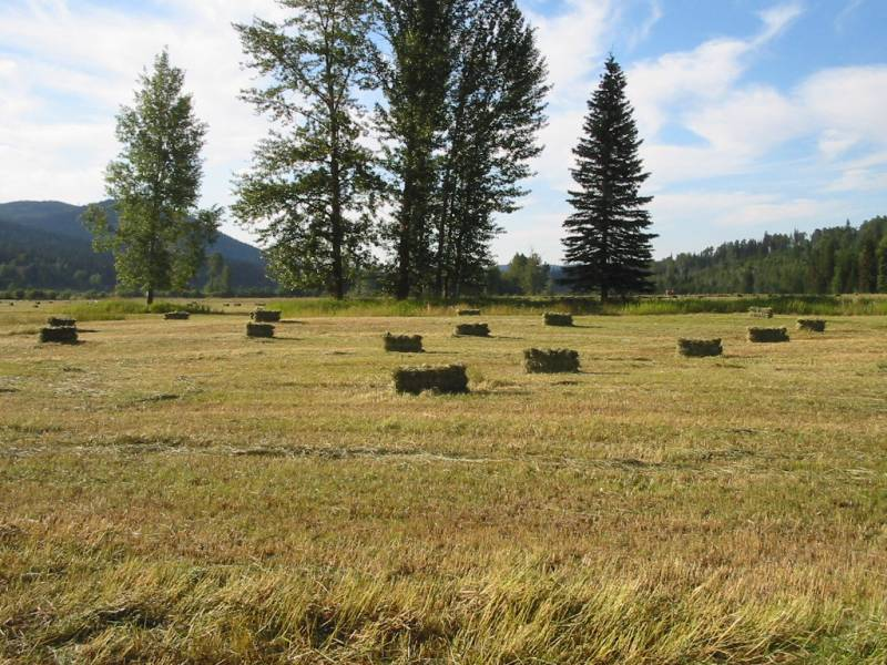 large hay bales sitting in a sunny field