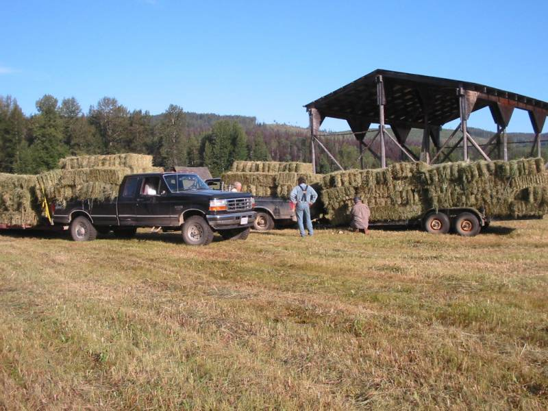Farm trucks and trailers filled with stacked hay