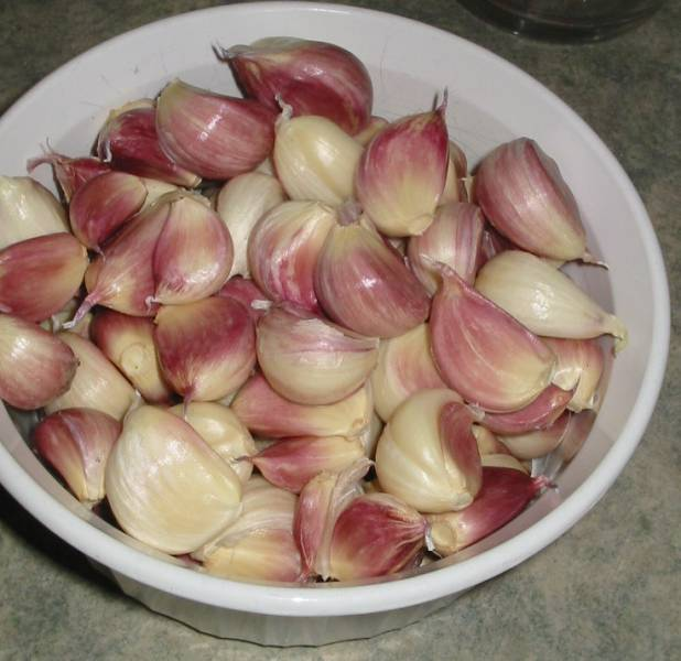 A bowl of large garlic cloves separated for planting.