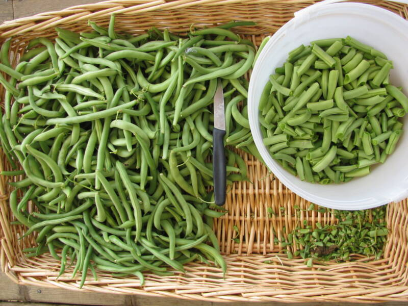 chopped runner beans