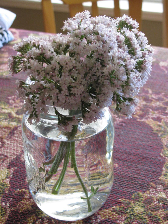A Valerian bouquet in a mason jar on the table.