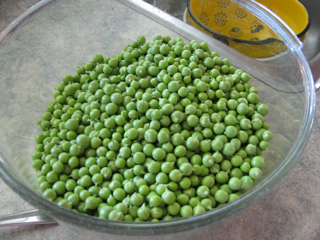 shelled peas ready for blanching