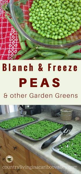 Blanching vegetables for the freezer is easy to do. Grow your own or buy in bulk. Then freeze to eat all winter long. #gardening #freezing #peas