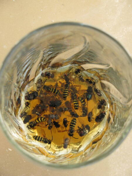 Safely kill wasps in a glass of beer
