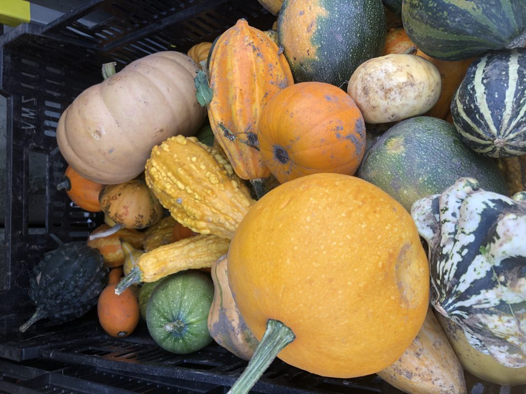 pumpkin and squash ready to be store for winter use