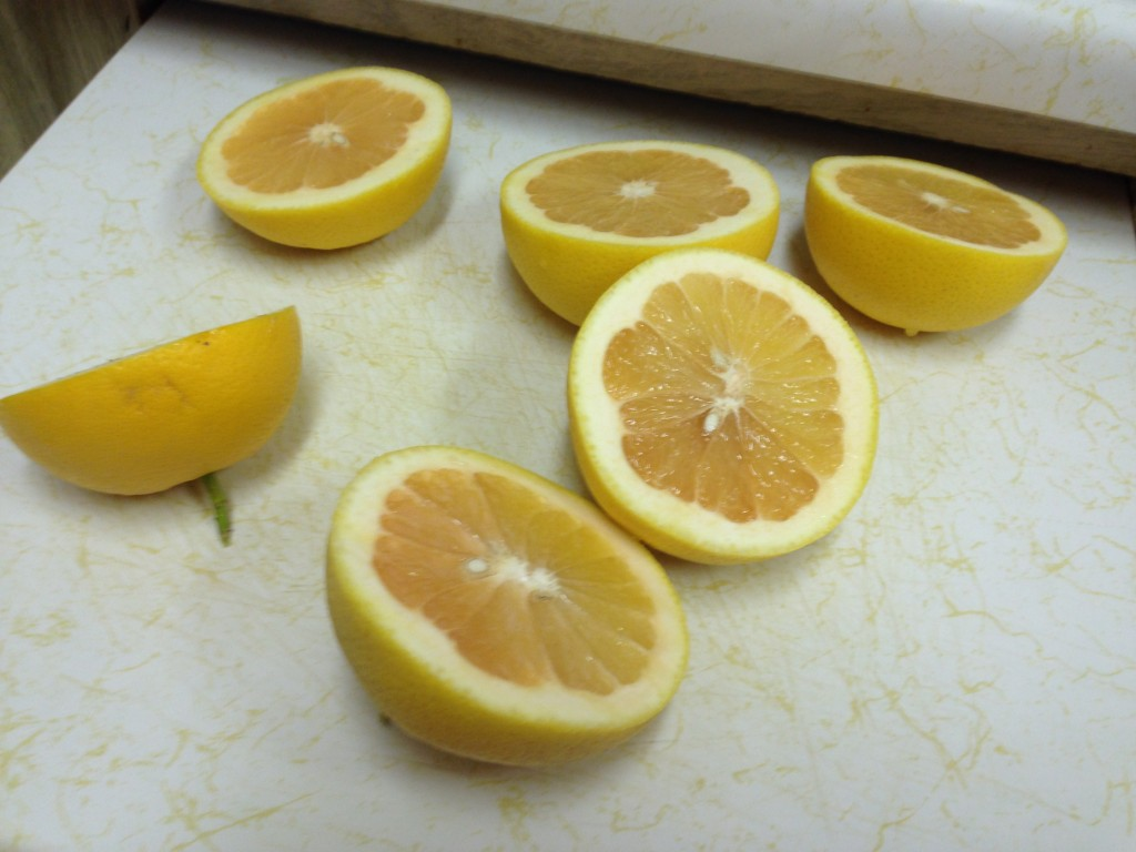 Grapefruits right off the tree