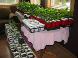 Grow Your Own Vegetables!