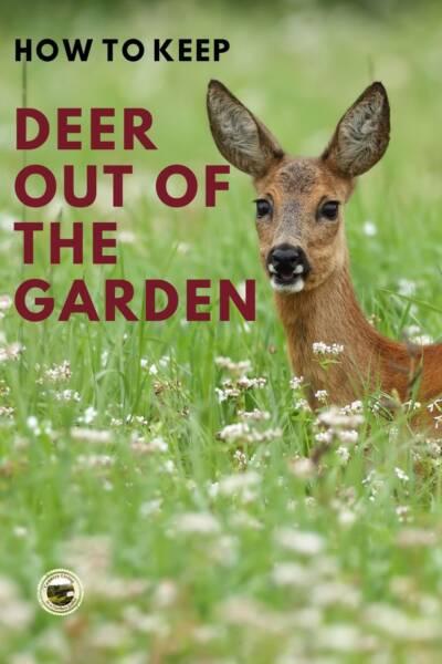a deer eating in a garden
