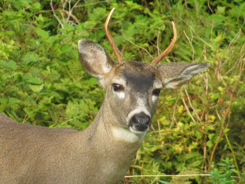 Deer in the garden? Keep them out by doing this!