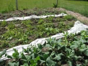 Zuccini and Green Bush Beans