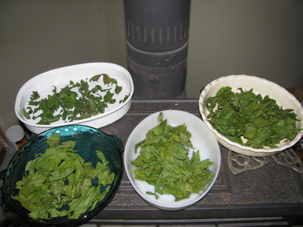 drying herbs, how to dry herbs